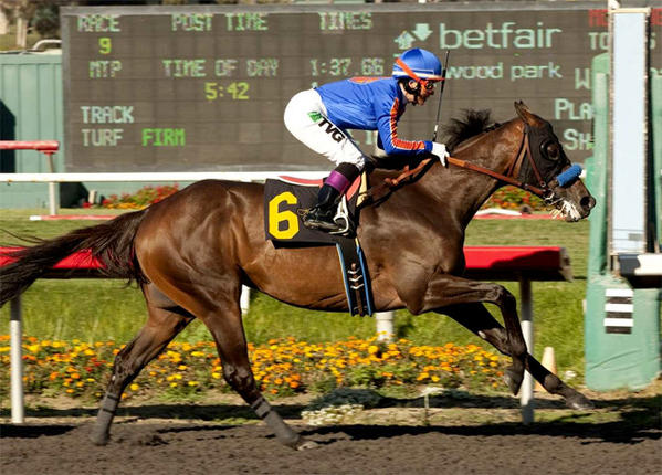Game On Dude cruises to victory in the Grade I, $500,000 Hollywood Gold Cup last July.