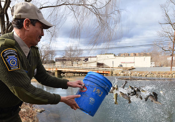 Lee Cryer, Pennsylvania Fish and Boat Waterways Conservation Officer of Lehigh County tosses trout into Cedar Creek in Allentown during the first trout stocking of 2013. Trout season opens in Southeastern Pa. on Saturday, March 30. The average size of the trout produced for stocking is 11 inches in length.