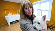 Pictures: Premier Pet Grooming