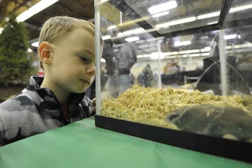 Evan Carss, 4 of Germansville looks at flying squirrels at a wild animal exhibit. The Lehigh Valley Sportsman's show returned after a several year absence Sunday March 3, 2013 to the Agri-Plex at the Fairgrounds in Allentown. The show that caters towards outdoor sporting enthusiasts drew vendors from as far away as Africa and over 13,000 visitors.