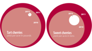 Tart & sweet cherry yields