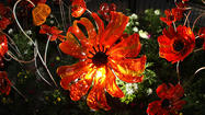 Pictures: Glass poppies at 2013 Epcot International Flower & Garden Festival