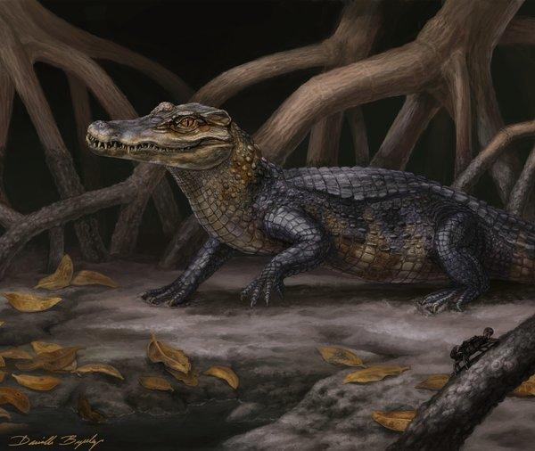 This image shows a life reconstruction of Culebrasuchus mesoamericanus in its ancient near-coastal environment during the early Miocene of Panama. Researchers have found skull fragments from two caimans that show the reptiles may have crossed continents earlier than thought.