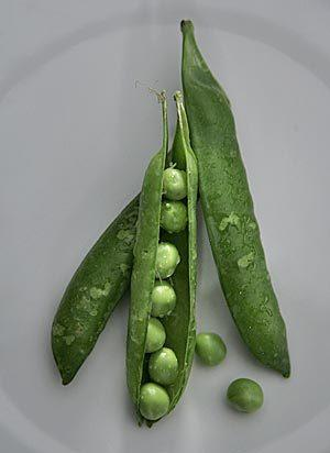 For a quick fix, simmer the peas in their pods in a skillet with about 1 inch of water and a nice chunk of butter.