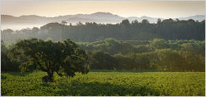 Williams Selyem estate vineyard in Russian River Valley