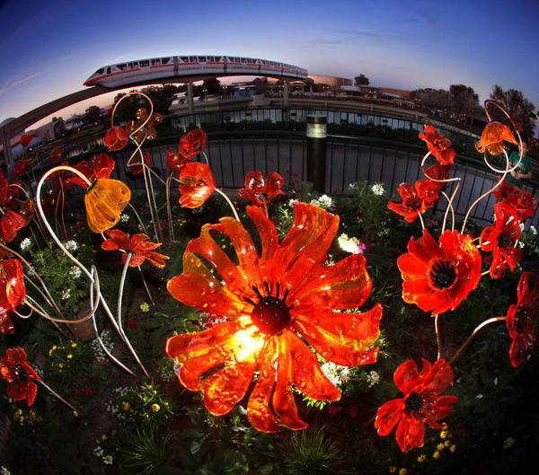 Glass poppies at Epcot