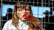 Something to crow about at Central Florida Fair