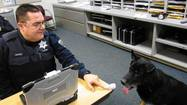His hind legs drag a bit as he rounds corners on the linoleum-lined hallways of Tinley Park Police headquarters, but Thor, the department's K-9 for the past seven years, still has the enthusiasm of a rookie.