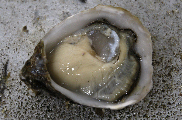 This shy bivalve is looking for crisp partner.