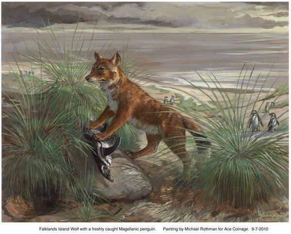 A painting of an extinct Falkland Islands wolf with its prey.