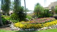 Win a yard makeover from Busch Gardens landscapers.