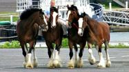 See Budweiser Clydesdales in Fort Lauderdale today