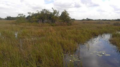 Environmentalists warn that law change helps Big Sugar dodge Everglades cleanup