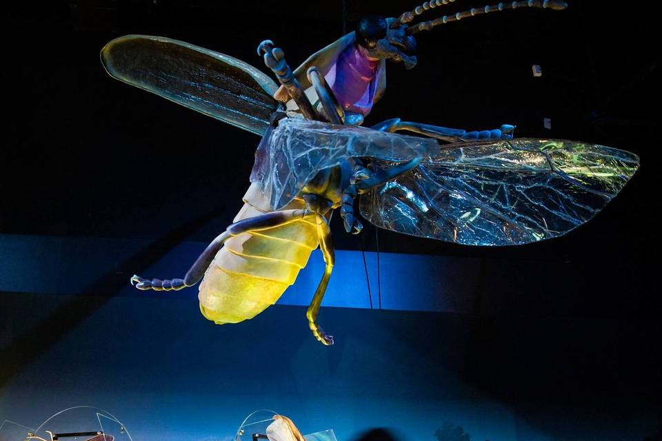 'Creatures of Light: Nature's Bioluminescence' at the Field Museum.