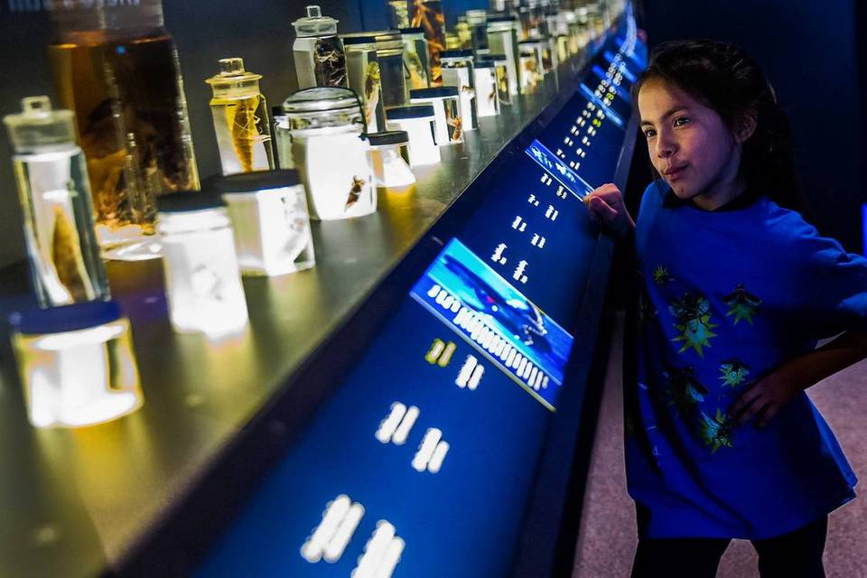 """Itzel Perez, 8 and other students from Whittier Elementary School look at display of deep sea creatures during a preview of The Field Museum exhibit """"Creatures of Light: Nature's Bioluminescence."""""""