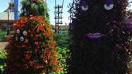 Pictures: Epcot International Flower & Garden Festival 2013