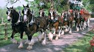 "I have no problem with horses, from Mr. Ed to Shane Battier's ""Harlem Shake"" Horsetronaut, but am I the only one around here who has an issue with the Budweiser Clydesdales worming their way into our St. Patrick's Day celebrations?"