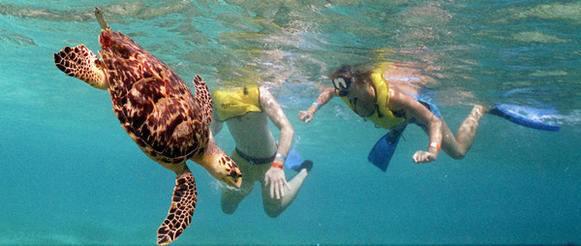 Snorkelers encounter sea turtles off the Cozumel coast