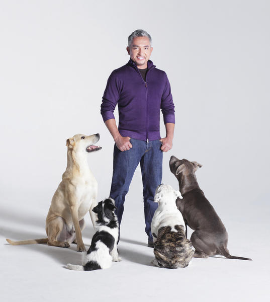 Cesar Millan said he will bring animals on stage and show films during his appearance in Shippensburg, Pa., to create a sense of understanding when it comes to dog ownership.
