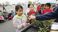 Photo Gallery: Sonora students receive seedlings
