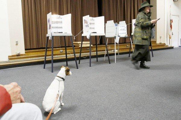 A dog waits while owner Deborah Murphy casts her ballot at a polling station at Allesandro Elementary School. The initial voter turnout for Los Angeles was 16%.