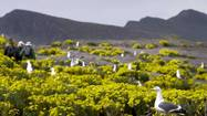 Anacapa Island thrives after rat eradication