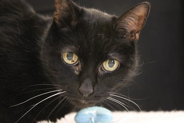 Sheba is in need of a new home.