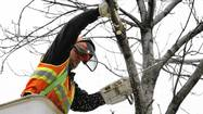 Options costly for battling emerald ash borer