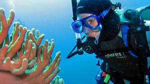 Indonesia: Maluku Islands offer an underwater wonderland