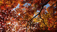 NEW YORK (Reuters Health) - Autumn is the time of year most associated with bumper crops of new babies, and that may be because human sperm are generally at their healthiest in winter and early spring, according to a new study from Israel.