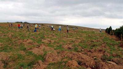 Volunteers plant tree seedlings last year at the Flight 93 National Memorial in Stonycreek Township.