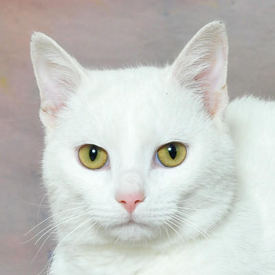 Pet of the week, Casper
