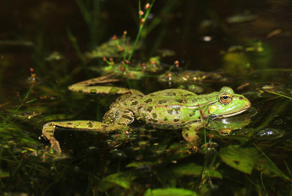 Pet frogs linked to salmonella outbreak in kids: CDC