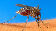 Mosquito-borne dengue virus lands in Key West