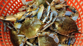 MARYLAND CRABS