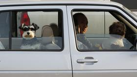 Sit, Stay: dog seat belt study