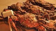 If you can find steamed crabs in Baltimore, consider yourself lucky.