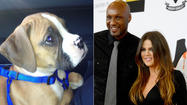 Lamar and Khloe's puppy has Kardashians in puppy love