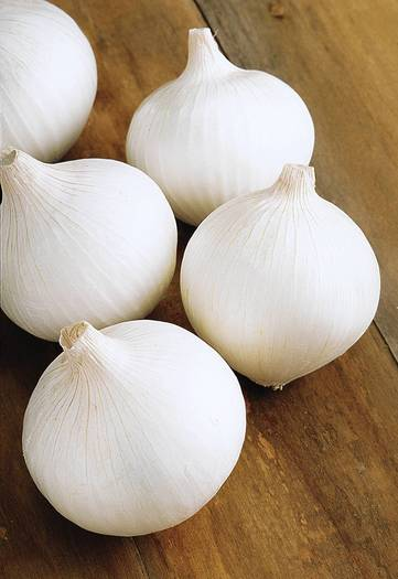 Texas early white onions
