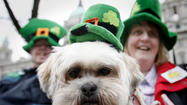 Could the path to the pot o' gold be paved with pawprints? Two local animal shelters think so, and they've invited you to special St. PAWtrick's Day parties to find out for sure.