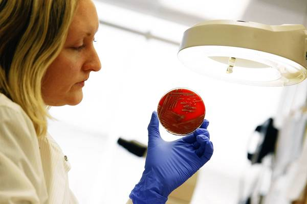 Scientist Erica Hillesland holds a petri dish containing cultures of carbapenem-resistant enterobacteriaceae in the microbiology lab at Rush University Medical Center.