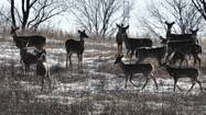 Deer at the Orland Grassland