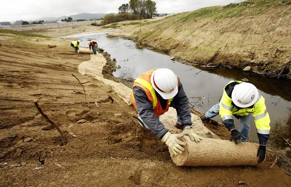 U.S. Army Corps of Engineers workers roll out jute netting to stabilize topsoil and minimize bank erosion along Haskell Creek in the Sepulveda Basin. The corps bulldozed 43 acres in December, angering bird watchers and environmentalists.