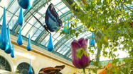 Las Vegas: Bellagio brings on the spring blooms