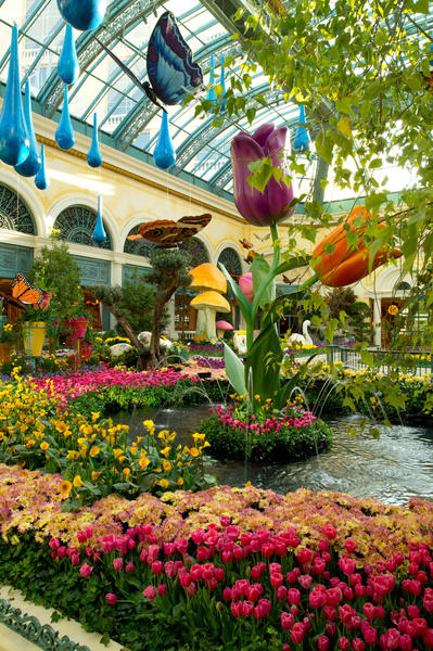 Giant tulips and raindrops tower over fresh spring flowers inside the Bellagio Conservatory & Botanical Gardens.