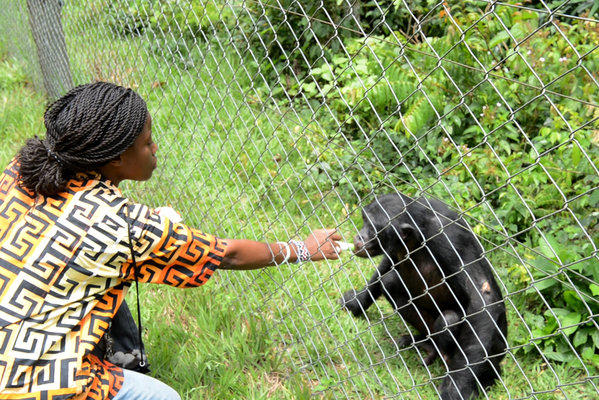 A veterinarian tends to an orphaned bonobo at a sanctuary in the Democratic Republic of Congo for bonobos saved from illegal trafficking.