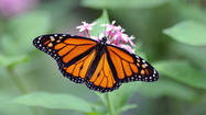 Many options for creating butterfly garden