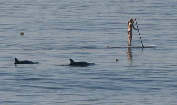A stand-up paddleboarder is trailed by two Pacific dolphins who follow her along the coast offshore from Anita Street in Laguna Beach.