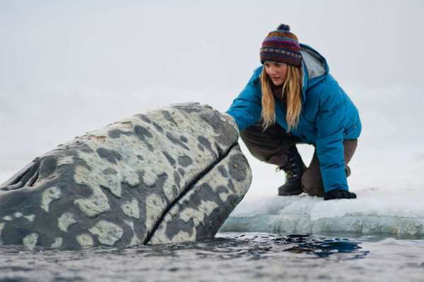"""Big Miracle"" with Drew Barrymore won the feature film Genesis Award."