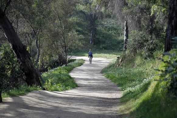 Trees and grass line the path at the beginning of a scenic 2.5-mile  trail at Elysian Park.